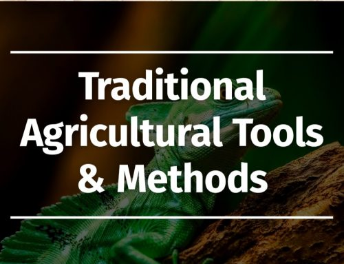 Online Photo Exhibition on Traditional Agricultural Tools & Methods